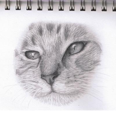 cat 9-2-09 001