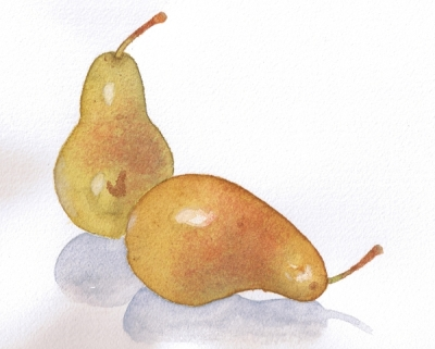 Two pears 11-04-09 1